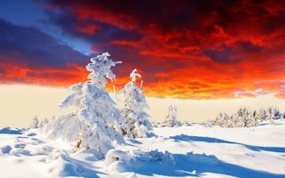 Photo free winter, snowdrifts, trees