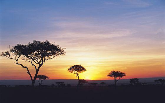 Заставки Африка,деревья,вечер,закат