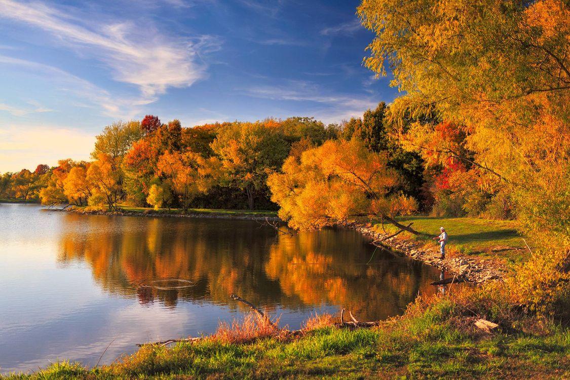 Фото бесплатно деревья, рыбак, лес - на рабочий стол