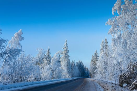 Photo free trees in the snow, snow, winter forest
