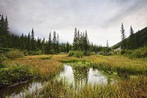 Фото бесплатно Kananaskis Country, Alberta, Canada, водоём, болото, деревья, пасмурно, пейзаж