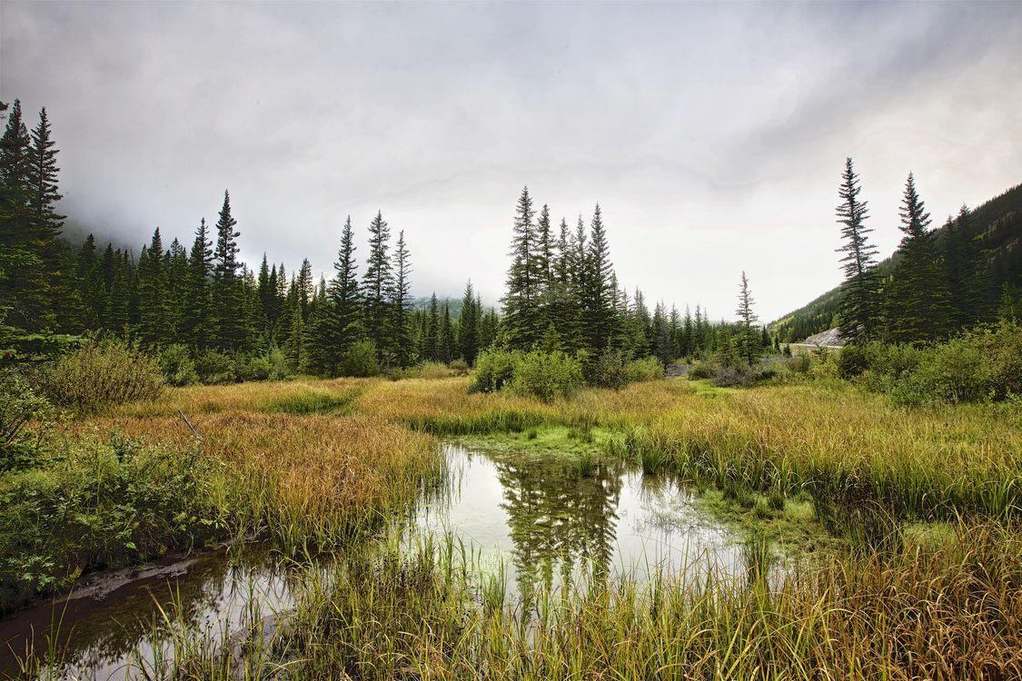 Фото бесплатно Kananaskis Country, Alberta, Canada, водоём, болото, деревья, пасмурно, пейзаж, пейзажи - скачать на рабочий стол