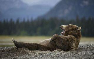Бесплатные фото медведь,бурый,морда,пасть,лапы,шерсть,земля