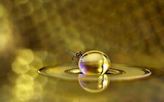 Обои пчела, крылья, лапки, шарик, соты
