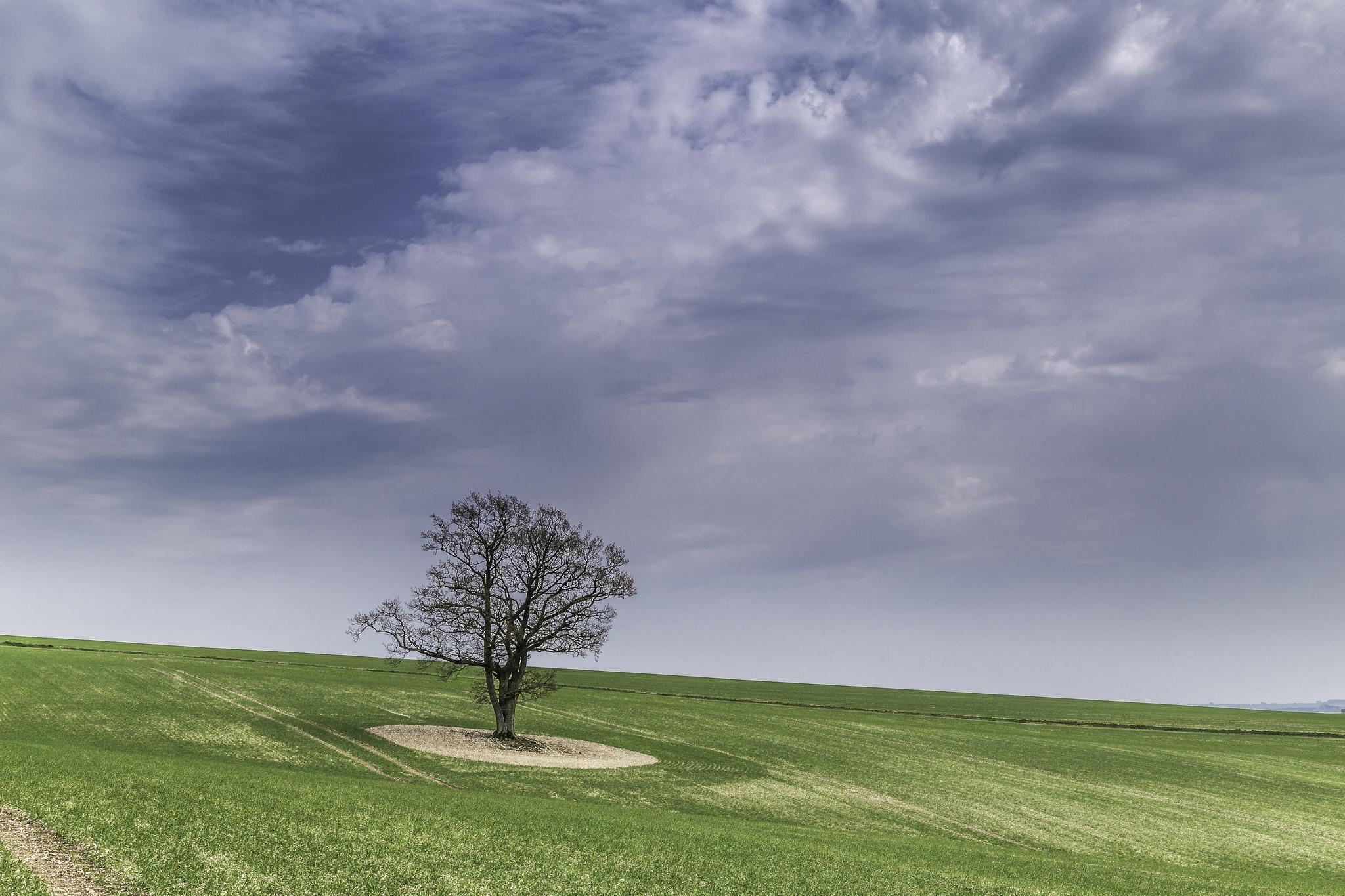 Обои поле, холм, дерево, пейзаж