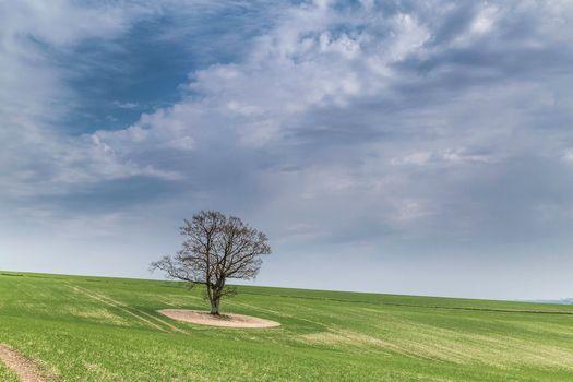 Фото бесплатно поле, холм, дерево