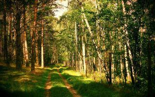 Бесплатные фото лес, тропинка, дорога