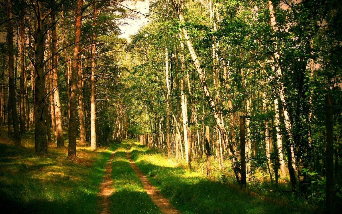 Фото бесплатно лес, тропинка, дорога - на рабочий стол
