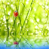 Заставки божьи коровки,солнце,вода,капли,зелень,лето,божья коровка