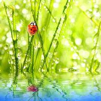 Фото бесплатно насекомые, жуки, лето