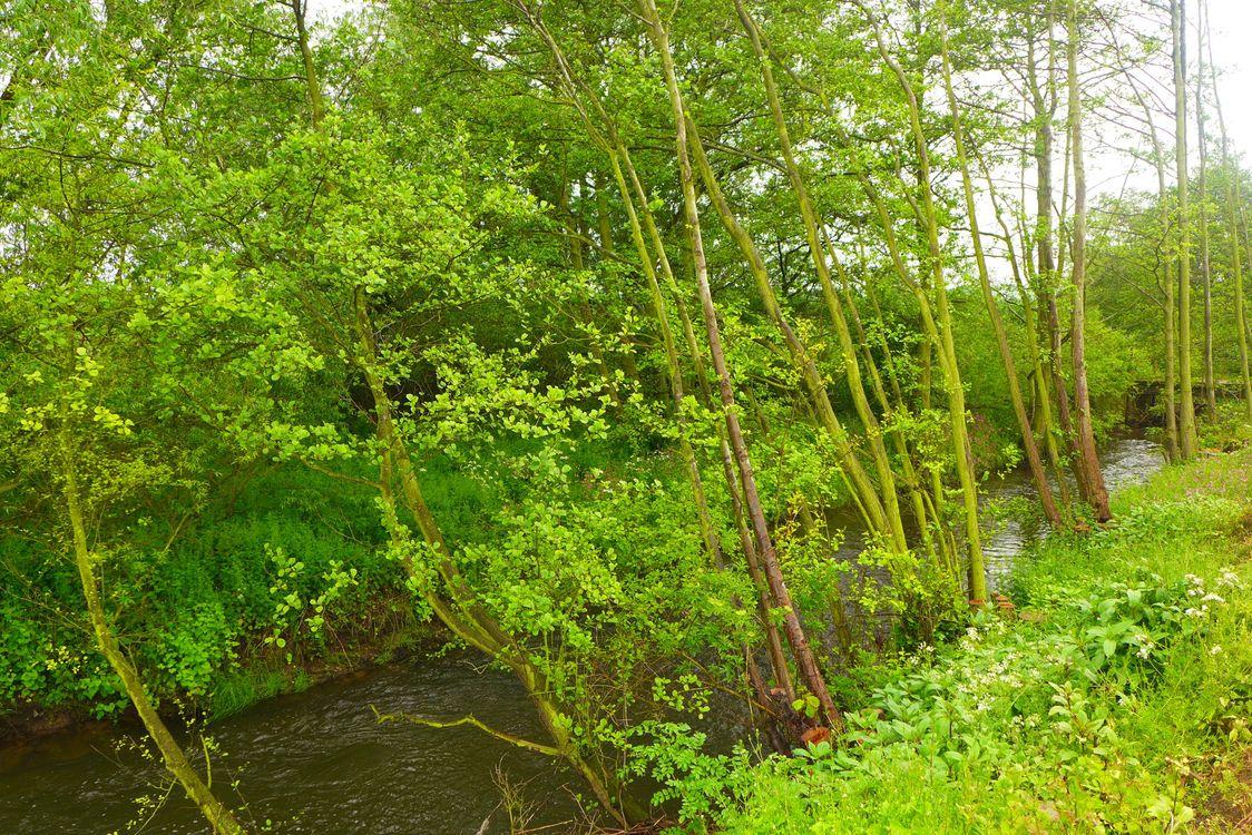 Фото бесплатно Лестершир, Англия, река, лес, деревья, природа, природа
