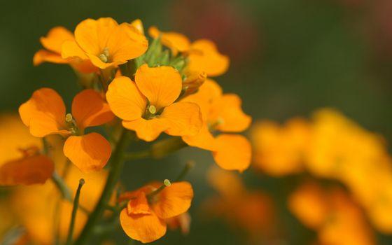 Photo free pistils, orange, green