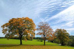 Бесплатные фото Германия, осень, поле, деревья, дорога, пейзаж