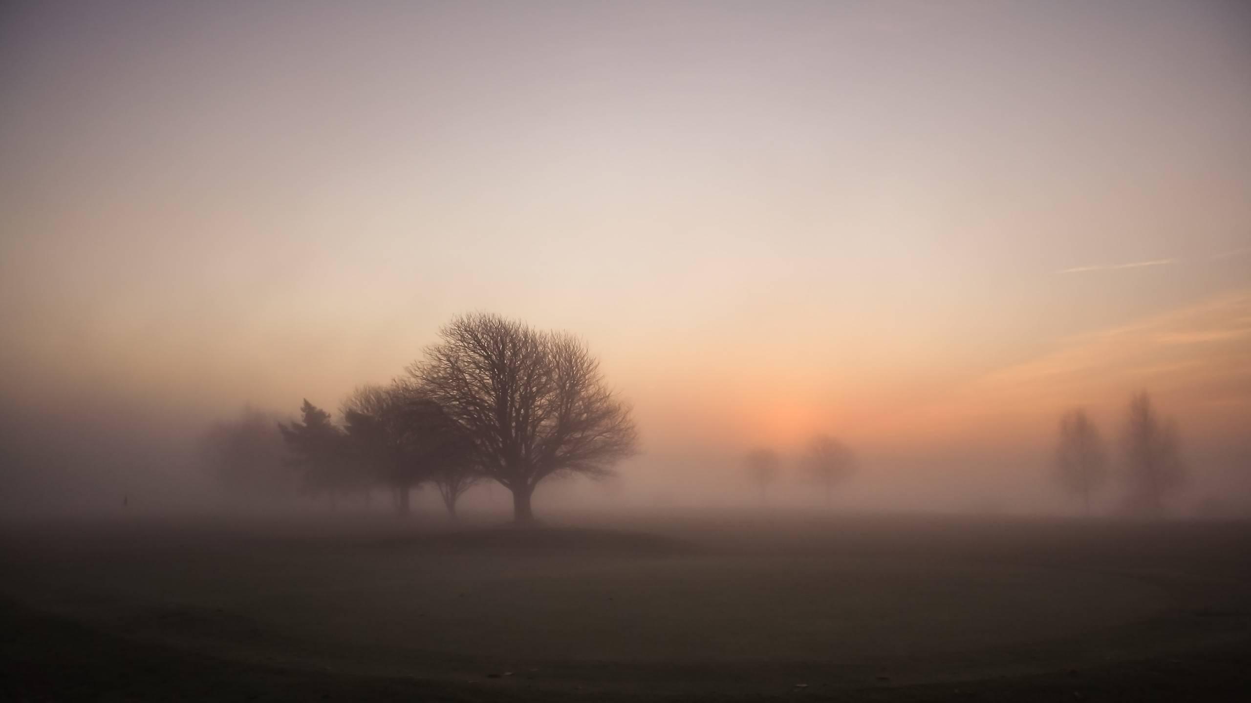 Рассвет утренний туман  № 3795913  скачать