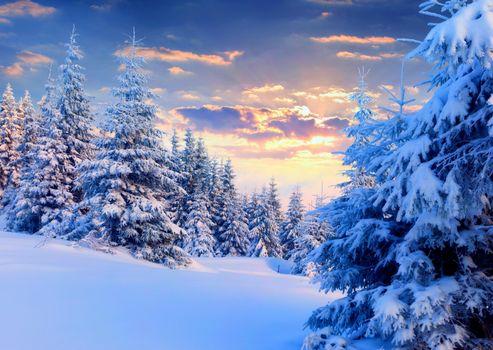 Photo free sunset, winter, fir trees