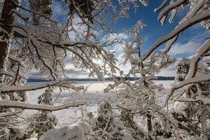 Бесплатные фото зима,снег,озеро,деревья,ветки