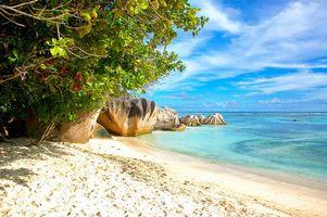 Бесплатные фото море,пляж,берег,деревья,пейзаж,seychelles