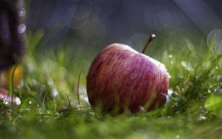 Заставки яблоко, фрукт, трава, зеленая, капли, вода