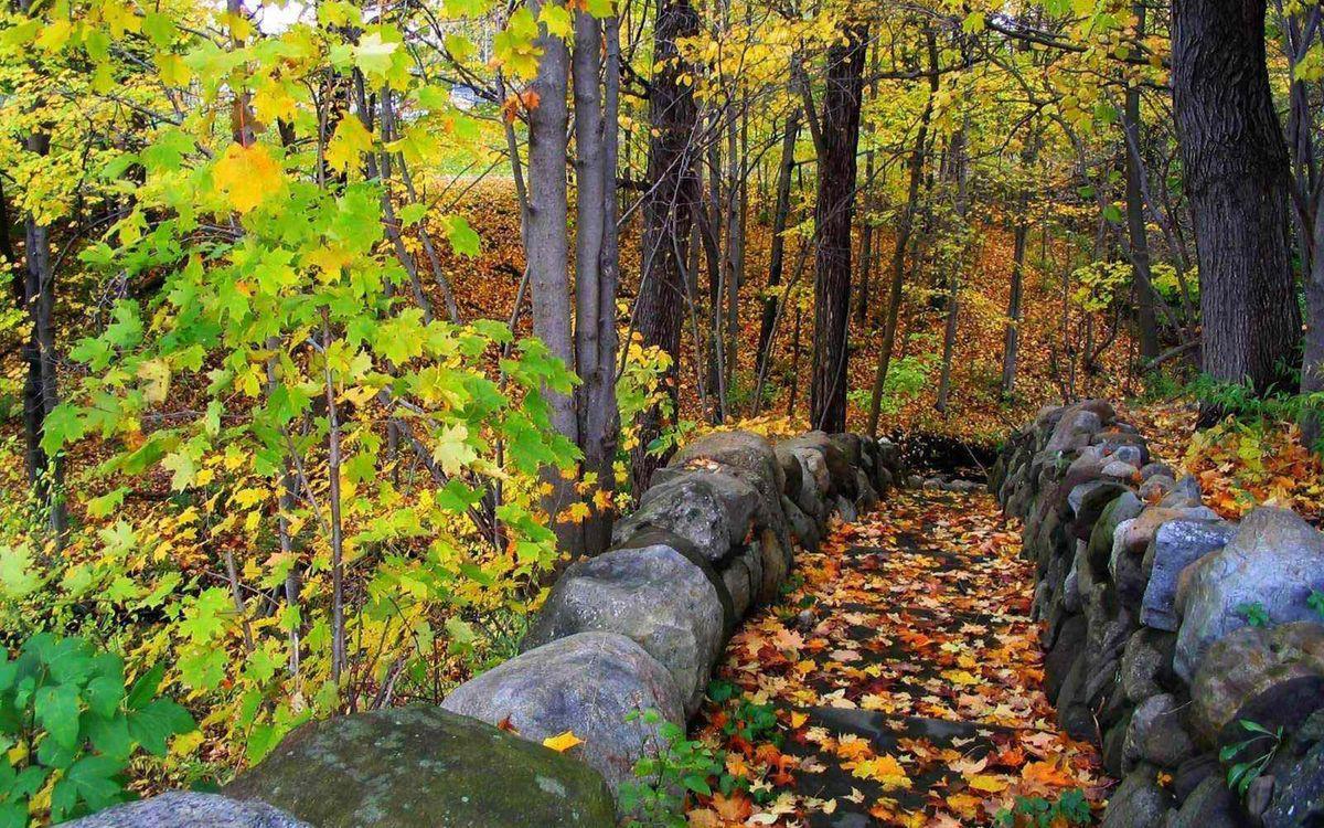 Фото бесплатно осень, деревья, листва, цветная, камни, кладка, пейзажи