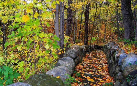 Фото бесплатно осень, деревья, листва, цветная, камни, кладка