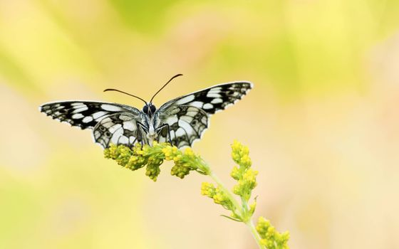 Photo of a butterfly, a blade of grass watch free