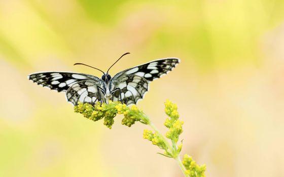 Фото бабочка, травинка смотреть бесплатно