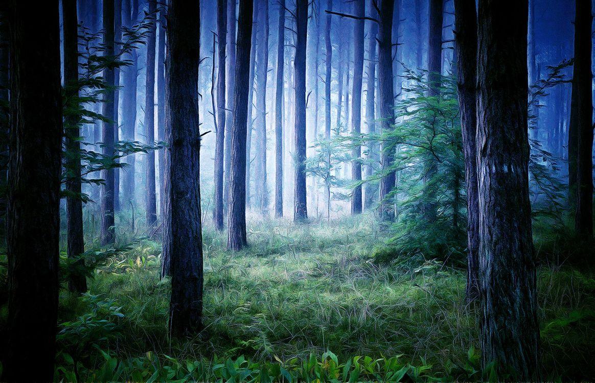 Фото бесплатно лес, деревья, природа, пейзаж, art, рендеринг