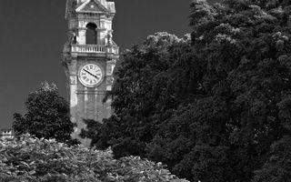 Фото бесплатно деревья, листва, башня