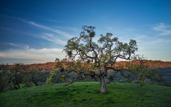 Фото бесплатно небо, деревья, зеленая