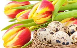 Обои тюльпаны, лепестки, бутоны, стебли, листья, гнездо, яйца