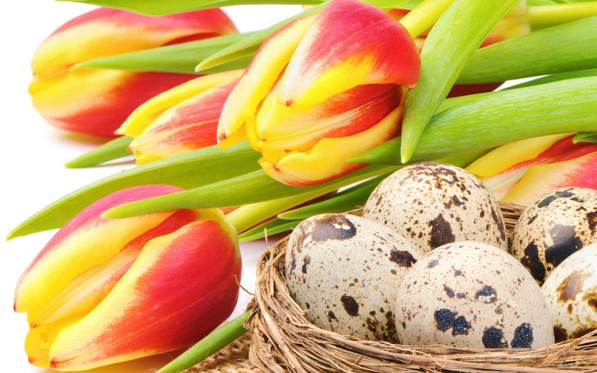 Картинка тюльпаны, лепестки, бутоны, стебли, листья, гнездо, яйца на рабочий стол. Скачать фото обои цветы