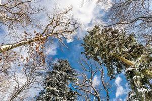 Бесплатные фото осень,деревья,кроны,небо,природа