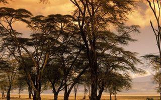 Фото бесплатно деревья, стволы, кроны