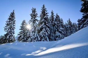 Фото бесплатно зима, снег, деревья, ели, сугробы, пейзаж