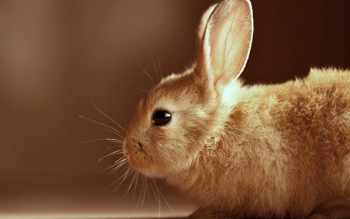 Фото бесплатно волосы, глаза, кролик - на рабочий стол