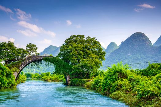 Photo free arched bridge, greenery, river