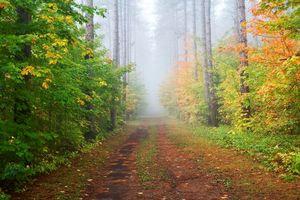 Заставки осень,лес,деревья,дорога,туман,пейзаж