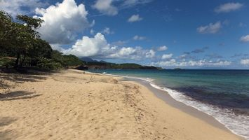 Фото бесплатно берег, пляж, песок, деревья, море, небо, облака