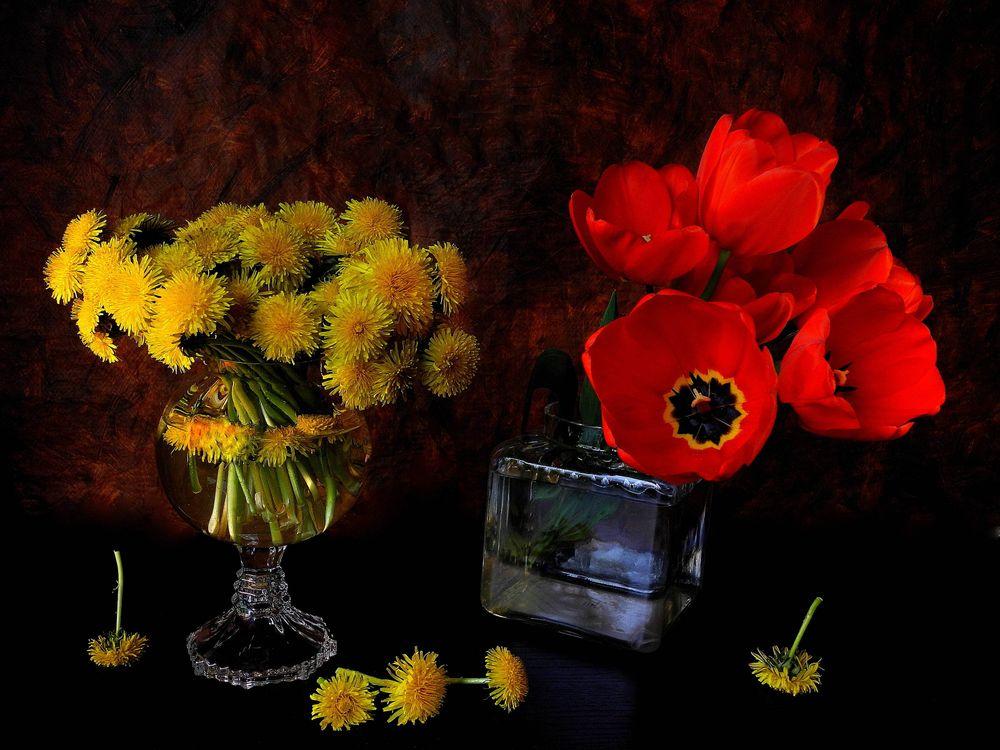Фото бесплатно одуванчики, тюльпаны, цветы - на рабочий стол