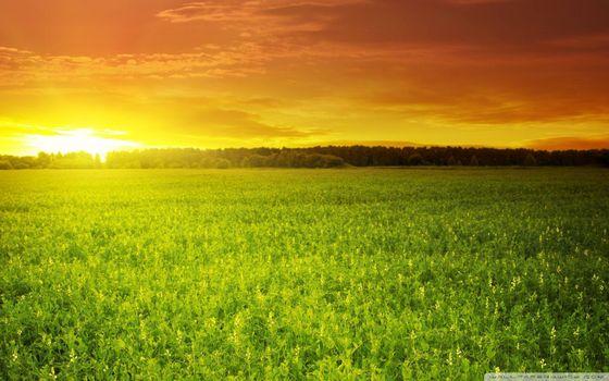 Photo free beautiful field sunset