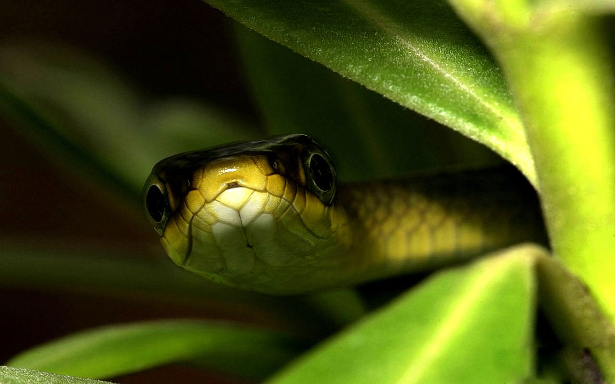 Фото бесплатно змея, глаза, шкура, чешуя, растение, зеленое, животные