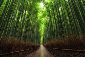 Фото бесплатно бамбук, бамбуковый лес, дорога, забор