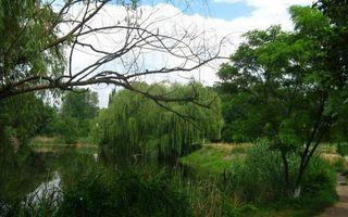 Фото бесплатно лето, река, трава, кустарник, деревья, небо