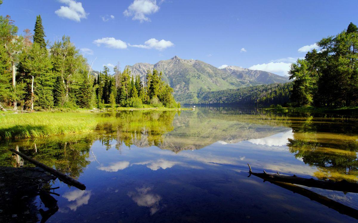 Фото бесплатно река, коряги, отражение - на рабочий стол