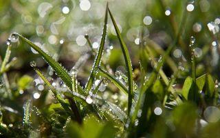 Бесплатные фото трава,зеленая,стебли,капли,вода,роса