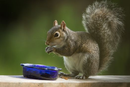 Красивые фотографии на тему белка, животное
