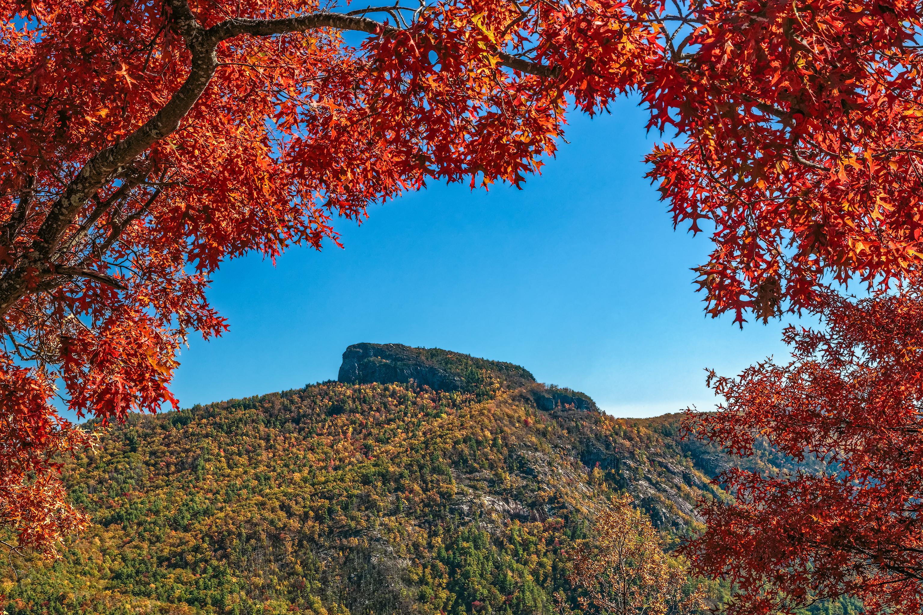 обои осень, горы, деревья, пейзаж картинки фото
