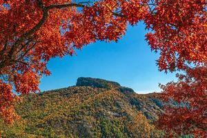 Бесплатные фото осень,горы,деревья,пейзаж