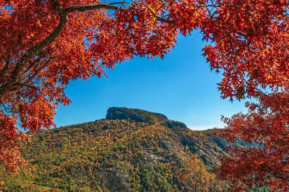 Free photo autumn, mountains, trees - to desktop