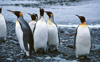 Бесплатные фото пингвины,перья,клювы,ласты,камни,вода